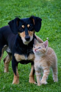 Carrollton maintains its standing of not euthanizing an adoptable animal since November 2013. photo source: pixabay.com