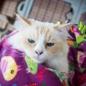 No that is not Grumpy Cat! It is Samson who recently found a furrever home through Operation Kindness' new Kindness Klubhouse